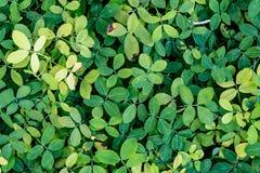 Le vert laisse le plancher photographie stock