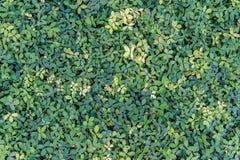 Le vert laisse le plancher image stock
