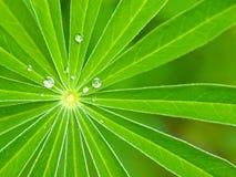 Le vert laisse le rayonnement du centre avec des gouttelettes d'eau Photo libre de droits