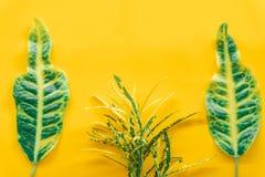 Le vert laisse minimal sur le fond jaune images stock