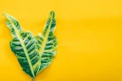 Le vert laisse minimal sur le fond jaune photo libre de droits