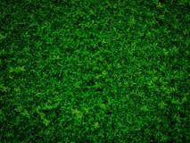 Le vert laisse le mur naturel Photographie stock libre de droits