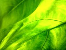 Le vert - naturel Photo libre de droits