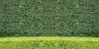Le vert naturel de deux tons laisse le fond de mur Image stock