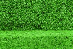 Le vert naturel laisse le fond de mur Images stock