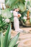 Le vert part au foyer au fond brouillé des nouveaux mariés de baiser Images stock