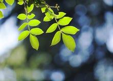 Le vert part au soleil au milieu du ressort images libres de droits