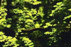 Le vert part au soleil au milieu du ressort photo stock