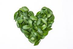 Le vert part dans la forme de coeur sur le fond blanc Images stock