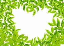 Le vert part dans la forme de coeur sur le fond blanc Image stock