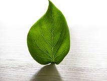 Le vert part sur le fond des conseils en bois Photographie stock libre de droits