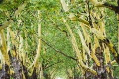 Le vert part sur les arbres plats en été en Pologne photo stock