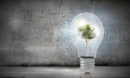 le vert pensent Image libre de droits