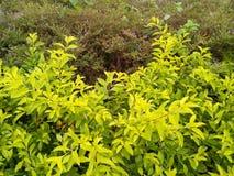 Le vert pluvieux laisse le fond de texture images libres de droits
