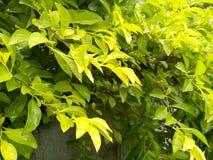 Le vert pluvieux laisse le fond de texture photos libres de droits
