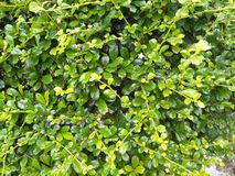 Le vert pluvieux laisse le fond de texture images stock