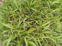 Le vert pluvieux laisse le fond de texture photos stock