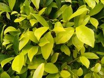 Le vert pluvieux laisse le fond de texture image stock