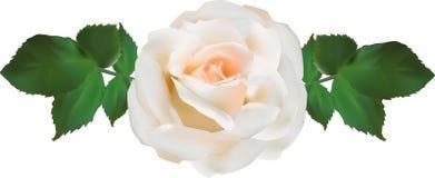 Le vert rose d'isolement simple de witg de crème légère part Photographie stock libre de droits