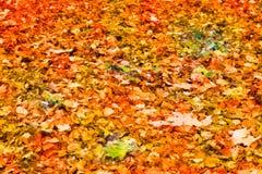 Le vert rouge jaune de Falled part au sol Photo libre de droits