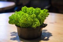 Le vert a saturé la mousse durable dans un pot sur une table en bois dans le café centrales décor image libre de droits