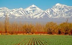 Le vert spectaculaire met en place les montagnes blanches   Image stock