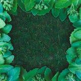 Le vert texturisé juteux frais part avec l'espace de copie, configuration plate, Bi images stock