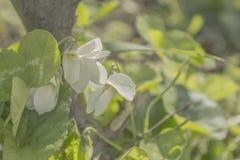 Le vert texturisé lumineux laisse la fleur rétro-éclairée et blanche Photos libres de droits