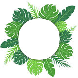 Le vert tropical laisse la bannière circulaire vide illustration stock