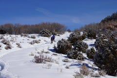 Le viandanti della racchetta da neve salgono a una collina Immagini Stock Libere da Diritti
