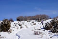Le viandanti della racchetta da neve salgono a una collina Fotografie Stock