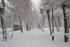 Le vie e gli alberi sono coperti di neve fresca Fotografia Stock