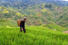 Le vieil agriculteur travaille et porte des paniers Photo libre de droits