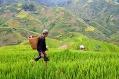 Le vieil agriculteur travaille et porte des paniers Photos libres de droits