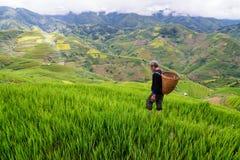 Le vieil agriculteur travaille et porte des paniers Photographie stock libre de droits