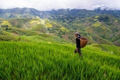 Le vieil agriculteur travaille et porte des paniers Images stock