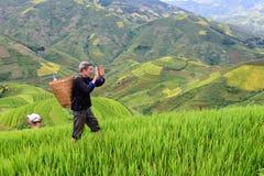 Le vieil agriculteur travaille et porte des paniers photos stock