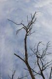 Le vieil arbre meurent Image stock