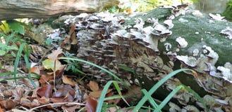 Le vieil arbre mort se situe dans la forêt sauvage, un tronc cassé Tronc cassé dans la forêt tropicale sur les feuilles tombées photo stock