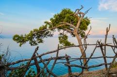Le vieil arbre se pliant au-dessus de la côte Images stock