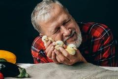 Le vieil homme émotif embrasse de petits poulets jaunes photos stock