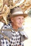 Le vieil homme péruvien porte des tiges de maïs Image stock