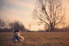 Le vieil ours de jouet se reposent dans le domaine Image libre de droits