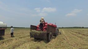 LE VIETNAM, LE 15 AVRIL : Moissonneuse de cartel travaillant au champ en Tay Ninh banque de vidéos
