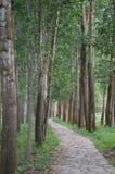 Le Vietnam - mon fils - chemin rayé par arbre à mon sanctuaire de fils Photos stock
