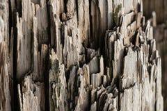 Le vieux bois brut noué criqué putréfié superficiel par les agents vignetted la texture grunge Photographie stock