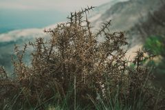 Le vieux buisson solitaire d'épine sur le flanc de coteau Images libres de droits