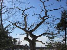 Le vieux chêne Image stock