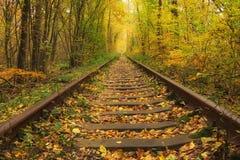 Le vieux chemin de fer par le tunnel célèbre de forêt d'automne de l'amour a formé par des arbres Klevan, obl de Rivnenska l'ukra Photographie stock libre de droits