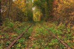 Le vieux chemin de fer par le tunnel célèbre de forêt d'automne de l'amour a formé par des arbres Klevan, obl de Rivnenska l'ukra Photos stock